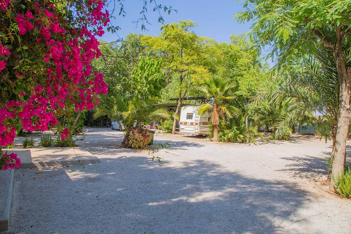 palmeras crevillent alicante camping adelfa